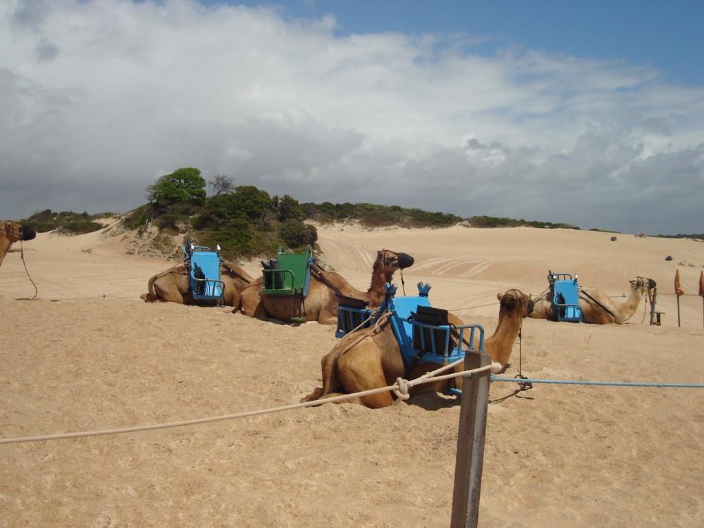 Passeio pelas dunas de Genipabu. Foto: Marcelle Ribeiro.