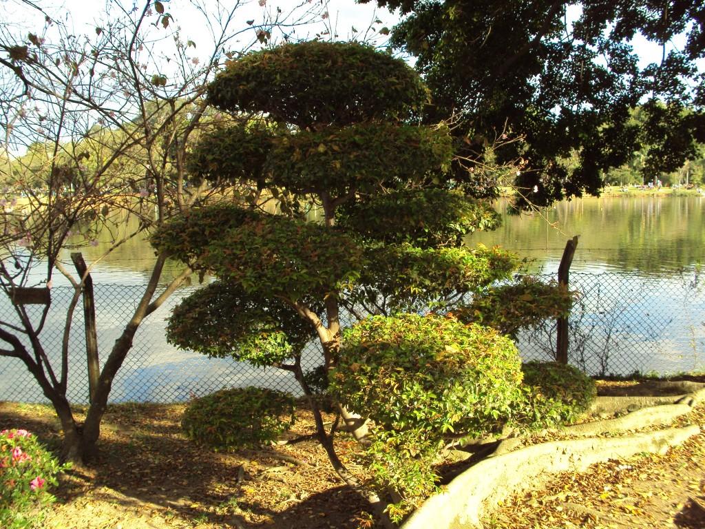 Os bonsais do Pavilhão Japonês. Foto: Marcelle Ribeiro
