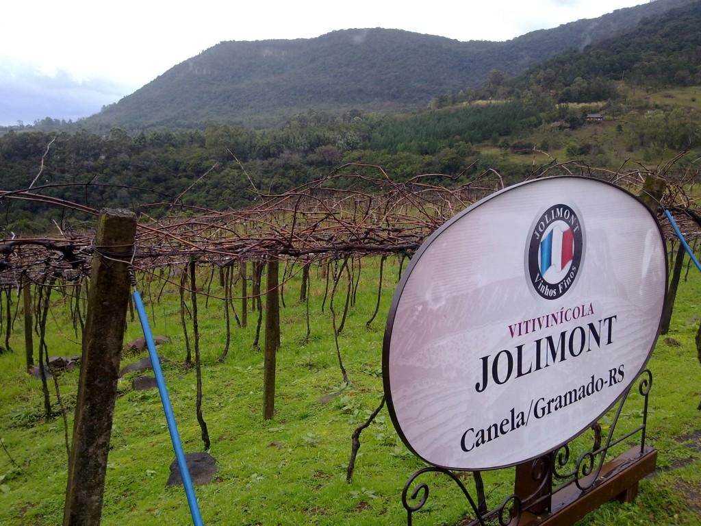 Parreiral da vinícola Jolimont. Foto: Marcelle Ribeiro