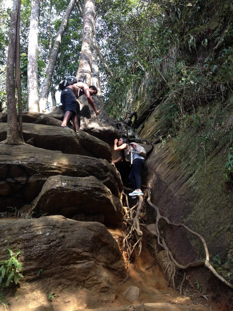 A escada de galhos na trilha para a Cachoeira do Chuveiro. Foto: Marcelle Ribeiro.