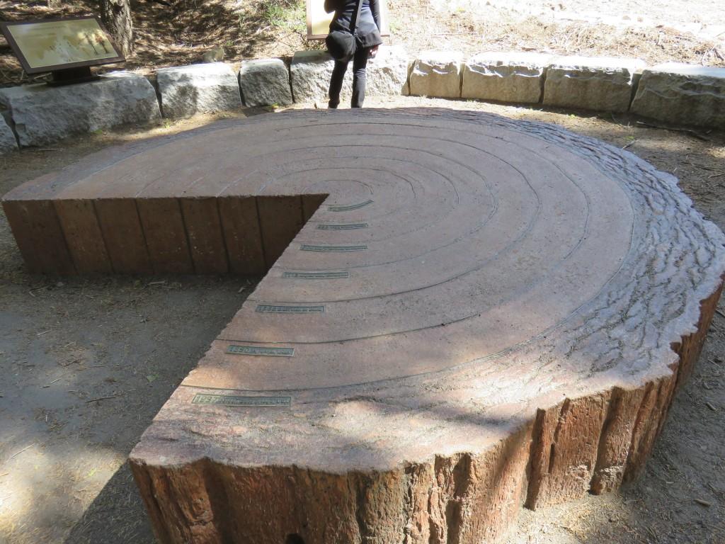 Recorte de sequóia gigante. Foto: Marcelle Ribeiro