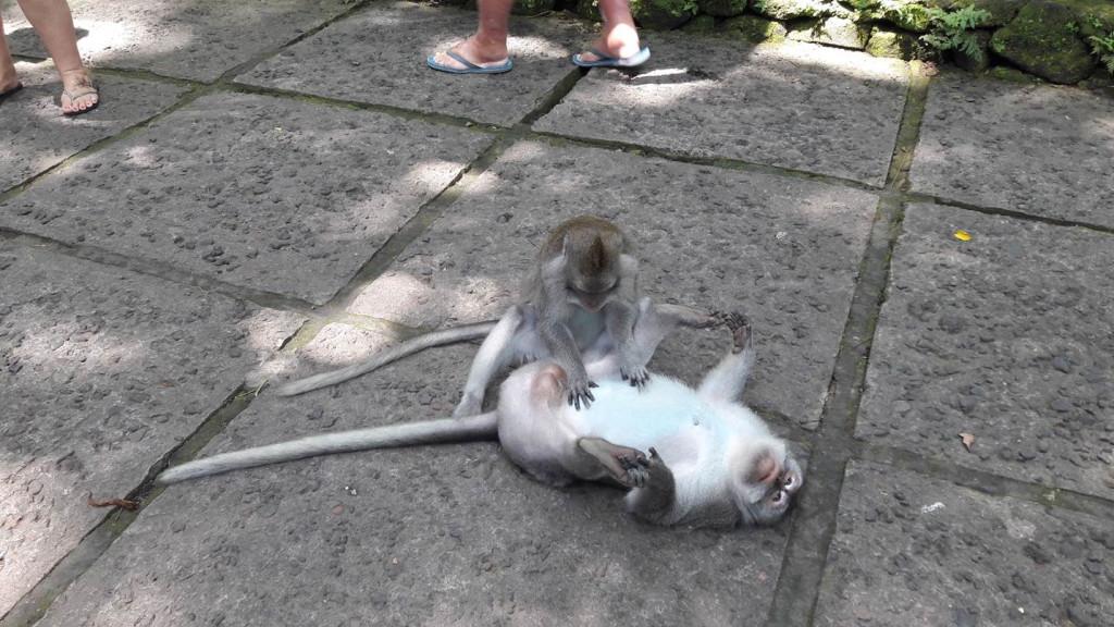 Os macacos se espalham por toda a Floresta! Foto: Marcelle Ribeiro
