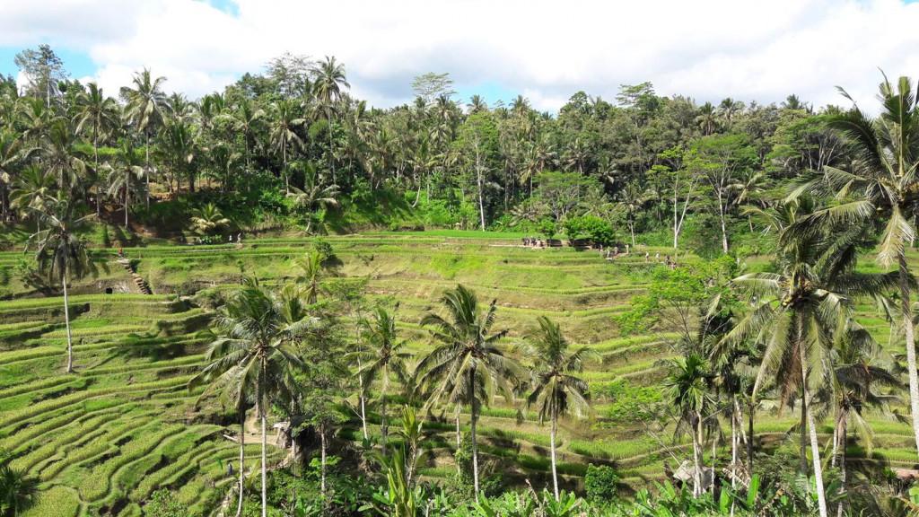 O visual do arrozal de Teggalalang é incrível! Foto: Marcelle Ribeiro