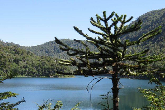 Laguna Verde, no Parque Huerquehue.