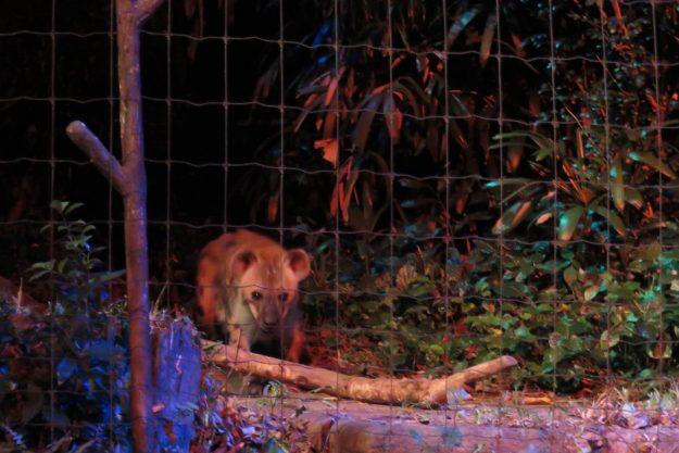 singapura-night-safari3