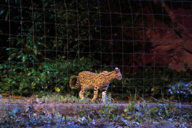 singapura-night-safari4