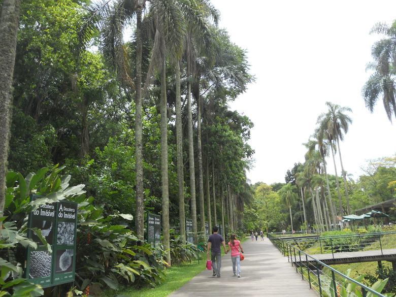 o que fazer em sp jardim botânico palmeiras