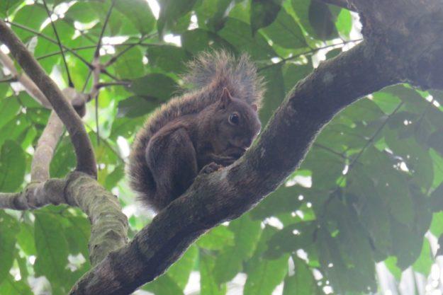 o que fazer em itatiaia esquilo parque nacional