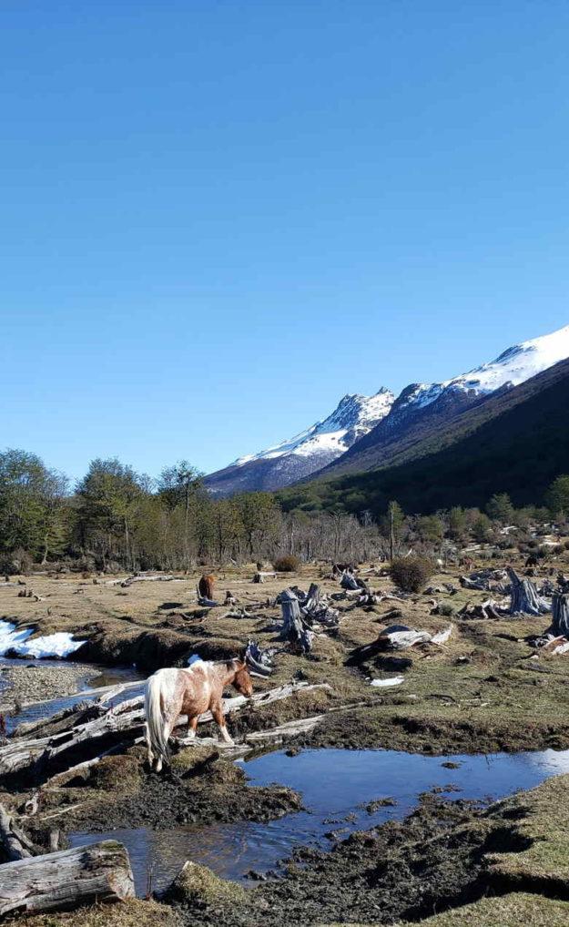 arvores cortadas parque nacional tierra del fuego